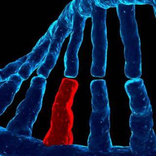 síndrome de Sanfilippo, prueba genética