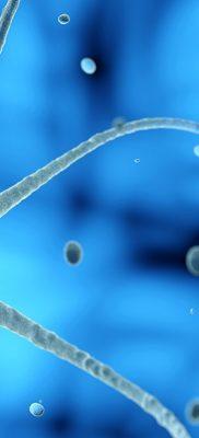 Nueva terapia para la ELA y otras enfermedades neurodegenerativas