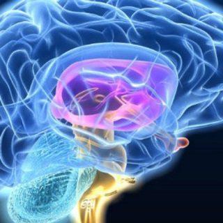 enfermedad de Huntington, investigación, diagnóstico