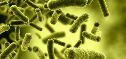 Investigación revela relación entre esclerosis múltiple y flora del sistema digestivo