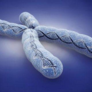 Tratamiento de la distrofia muscular con tecnología CRISPR en camino