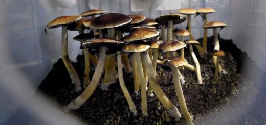 Terapias con alucinógenos: un riesgo por falta de regulación